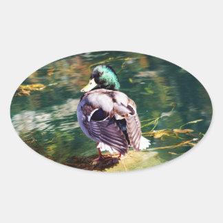 Autocollant ovale de canard de Mallard