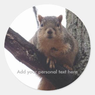 Autocollant personnel d'écureuil