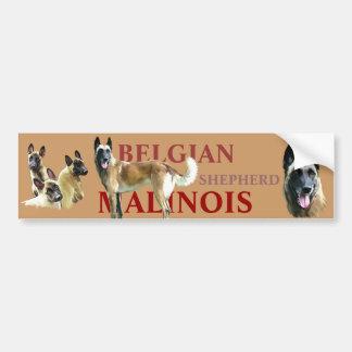autocollant pour voiture belgian shepherd malinois