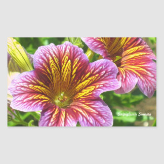 Autocollant pourpre de fleur de Sinuata de Salpigl