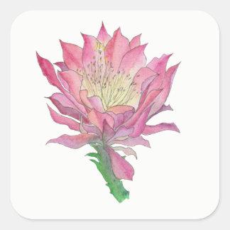 Autocollant rose de carré de fleur de cactus