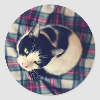 Autocollants aux yeux verts de photo de chat