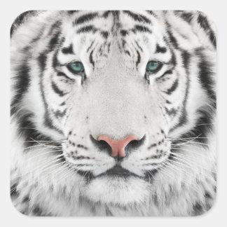 Autocollants blancs de carré de tête de tigre