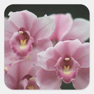 autocollants carrés hauts de fin rose d'orchidée