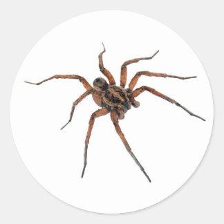 Autocollants d'araignée