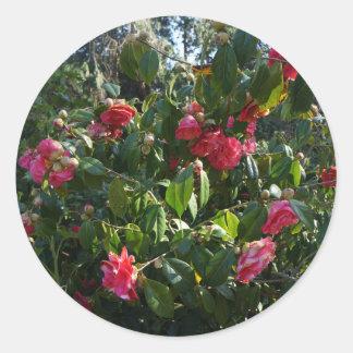 Autocollants de camélia de rose rose