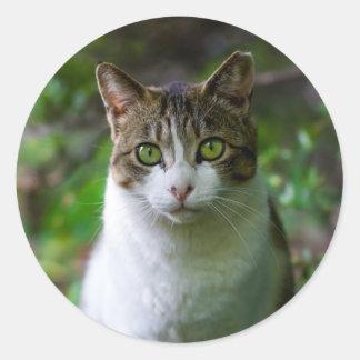 autocollants de chat de jardin