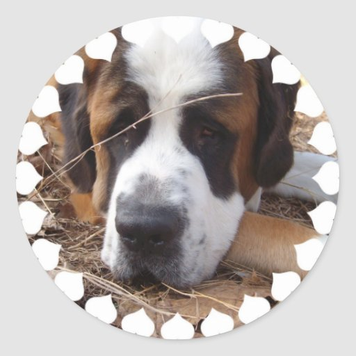Autocollants de chien de St Bernard