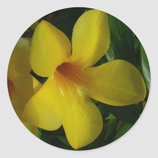 Autocollants de fleur de trompette d'or