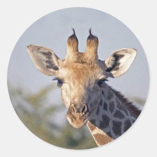 Autocollants de girafe