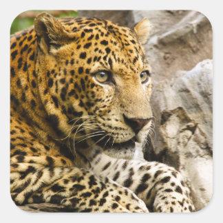 Autocollants de léopard