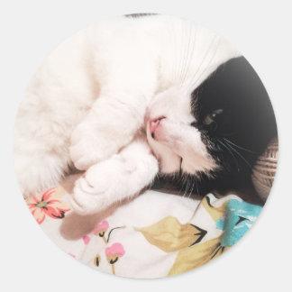 Autocollants mignons de photo de chat