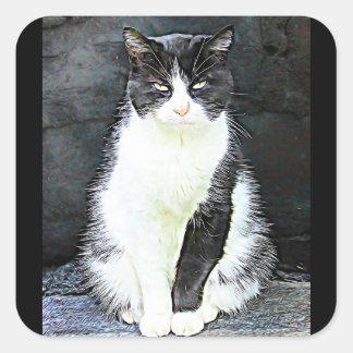 Autocollants noirs et blancs de chat