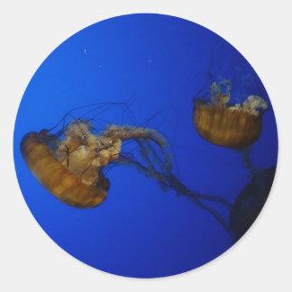 Autocollants Pacifiques de méduses d'ortie de mer