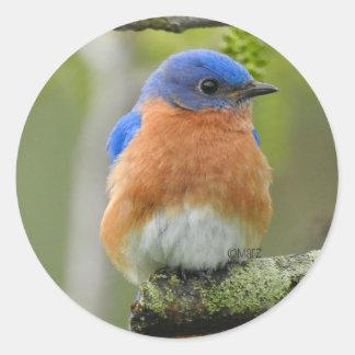 Autocollants ronds d'oiseau bleu