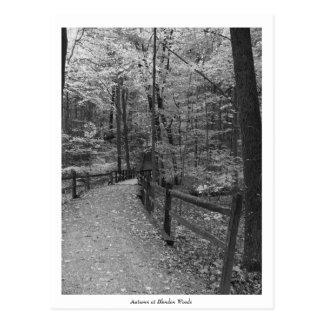 """""""Automne carte postale de Blendon à en bois"""""""