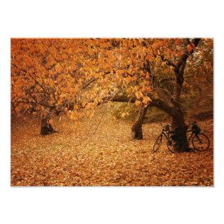 Automne de Central Park - New York City Tirage Photo