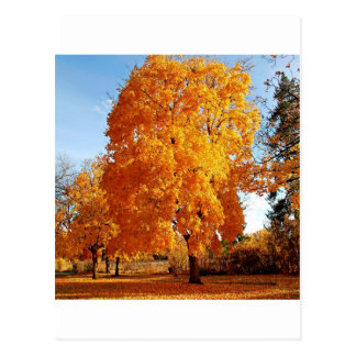 Automne de réalité d'arbre carte postale