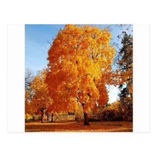 Automne de réalité d'arbre cartes postales