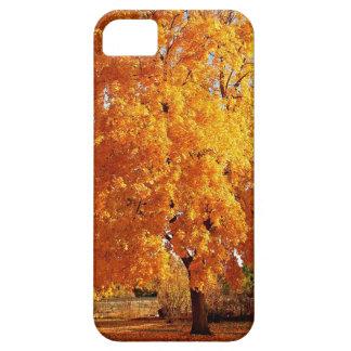 Automne de réalité d'arbre étui iPhone 5