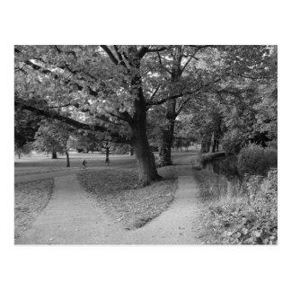 Automne en parc - noir et blanc carte postale