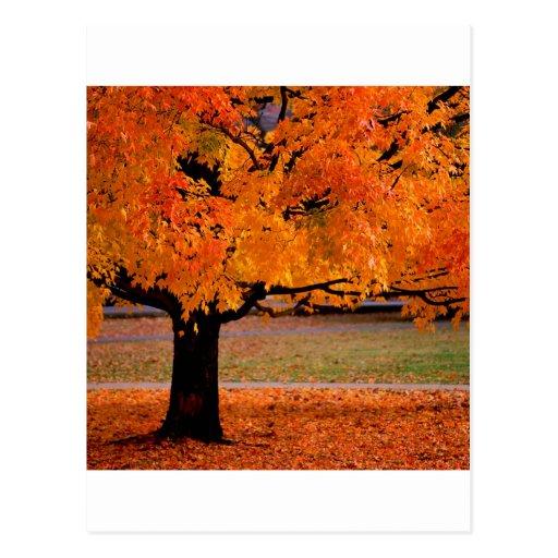 Automne une beauté cartes postales