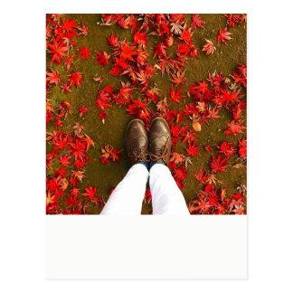 Autumn Carte Postale