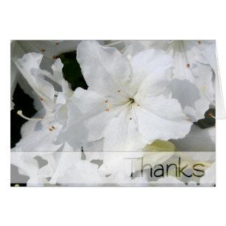 Azalée blanche - salutations de mercis cartes de vœux
