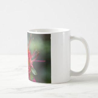 Azalées de floraison lumineuses Pentanthera de pri Tasses À Café