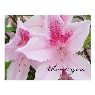 Azalées roses molles - carte postale de Merci