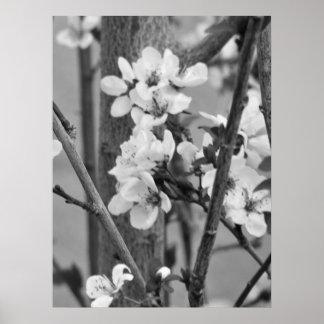 B&W floral - fleurs sensibles Poster