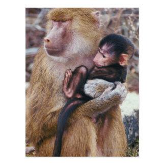 Babouin de mère et de bébé carte postale