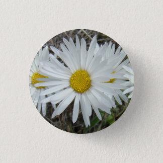 Badge Aster lisse des fleurs sauvages F0042 blancs