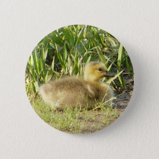 Badge Bouton de Gosling d'oie du Canada de bébé
