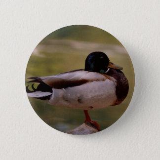 Badge Canard de Mallard
