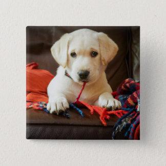 Badge Carré 5 Cm Chiot des images | de Getty sur un sofa