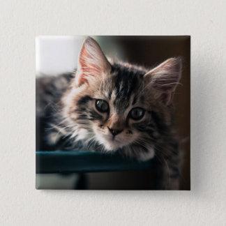 Badge Carré 5 Cm Jeune chat tigré masculin 2