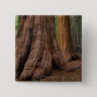Badge Carré 5 Cm Les Etats-Unis, la Californie, arbre de séquoia
