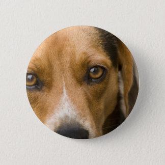 Badge Chien de chasse loyal de chien de beagle
