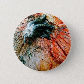 Badge Citrouille putréfié
