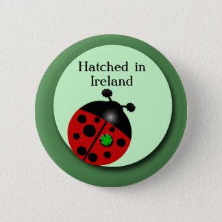 Badge Coccinelle irlandaise