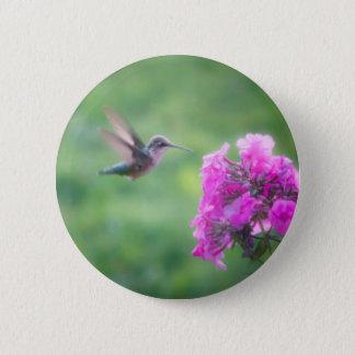 Badge Colibri planant buvant d'une fleur rose