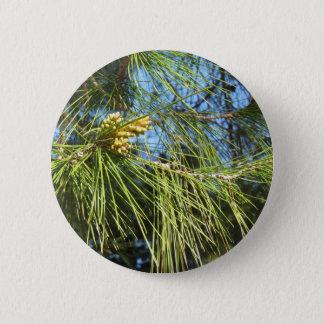 Badge Cônes non mûrs de mâle ou de pollen de pin