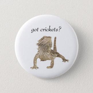 Badge Crickets obtenus