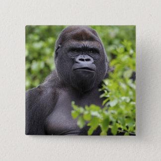 Badge Gorille de plaine de Silverback, gorille de