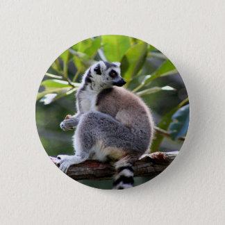 Badge lémur Anneau-coupé la queue