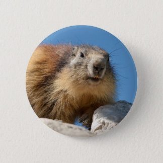 Badge Marmotte alpine sur la roche