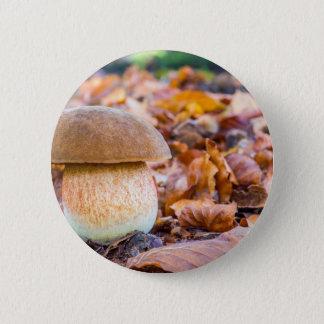 Badge Pain d'écureuil de champignon avec le feuille dans