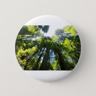 Badge Parc national de séquoia