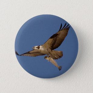 Badges Balbuzard personnalisés   Zazzle.fr f67c81669f2